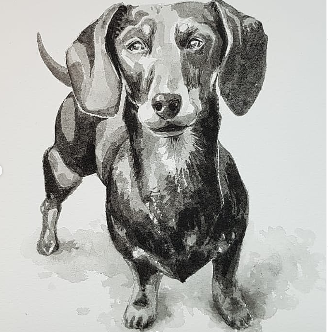 Ink pet portrait Rowan Briggs Smith